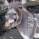 donkeyfeat
