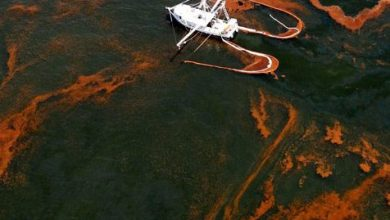 Photo of The BP Oil Disaster – Timeline And Resources